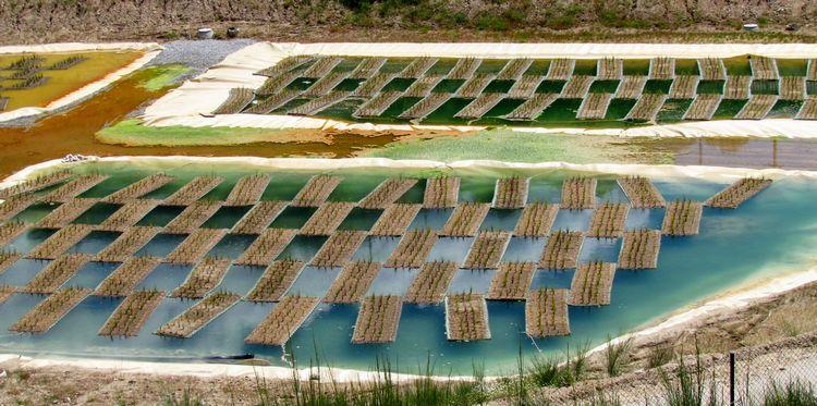 Phytoremediation per la bonifica di siti contaminati
