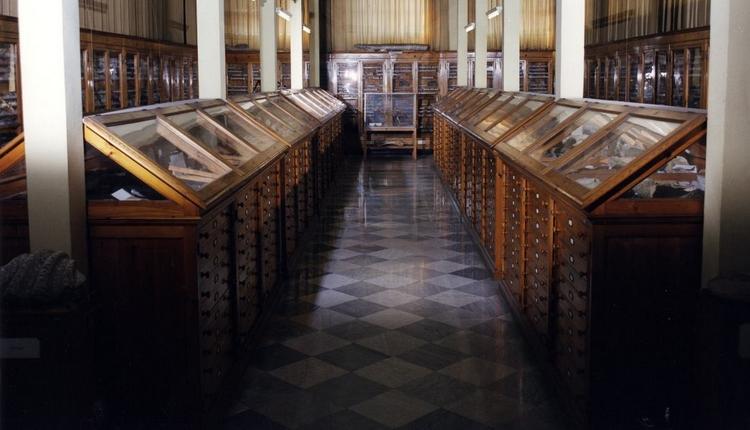 """Geopaleontologia italiana, nasce il Museo """"Quintino Sella"""""""